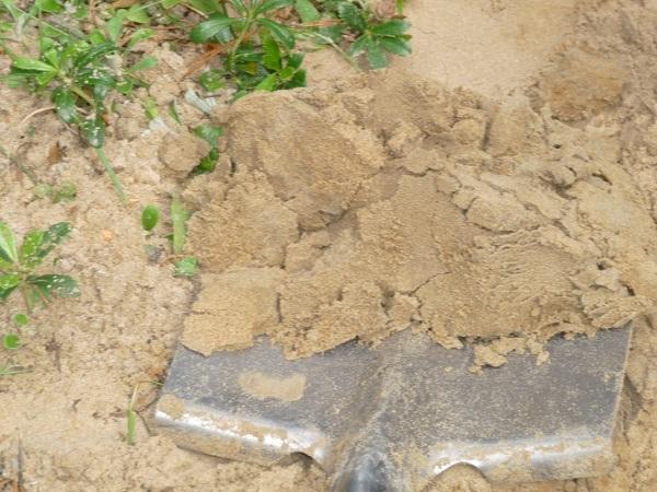 Возделывание песчаной почвы