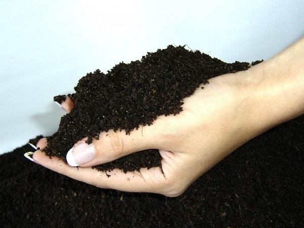 Биогумус – органическое удобрение