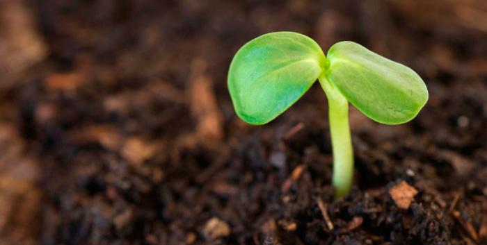 Верхний слой насыпки может состоять из плодородного грунта