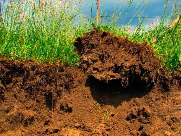 Растительный грунт обеспечит плодородность почвы